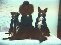 Sherry Wargo's dogs