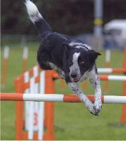 Norfolk Dog Training Society