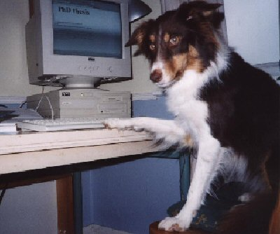Dogs and The Internet, The Good and The Bad