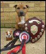 Javawolf Ever Reddy (Dakota) winner KC 2012